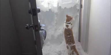 Kater gräbt sich durch Schnee