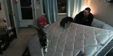 Hunde lieben das Rutschen