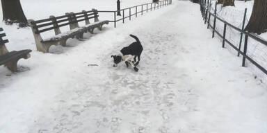 Mann stürzt, weil er Hund auslacht