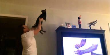 Katze und Mensch fangen Insekten
