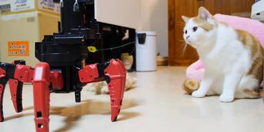 Roboter ist der perfekte Katzen-Sitter