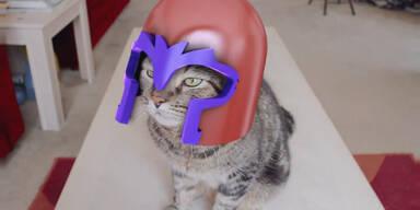 Magneto-Katze beherrscht die Welt