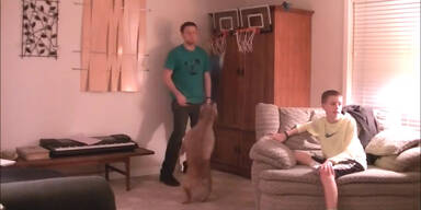 Hund liebt Basketball spielen