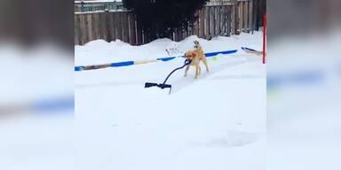 Hund hilft beim Schneeschaufeln