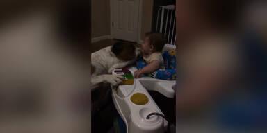 Hund wäscht Baby mit seiner Zunge