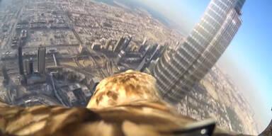 Adler fliegt vom Burj Khalifa hinunter