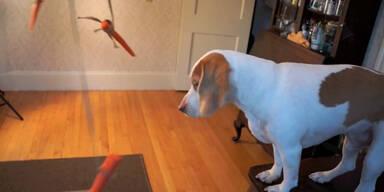 Hund versucht Karotten zu fangen