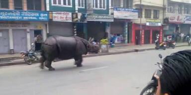 Durch Nepal läuft ein Nashorn