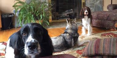 Hunde-Konzert im Wohnzimmer