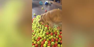 Hund bekommt Bälle zum Geburtstag