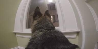 Kamera filmt unbeaufsichtigten Hund