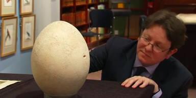 Ei einer inexistenten Vogelart