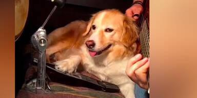 Hund beherrscht jedes Instrument