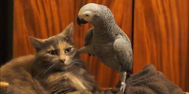 Gelangweilte Katze von Papagei genervt