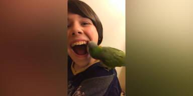 Papagei zieht einen Zahn