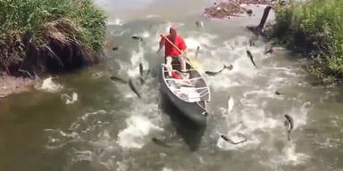 Kanu-Fahrer von Fischen attackiert