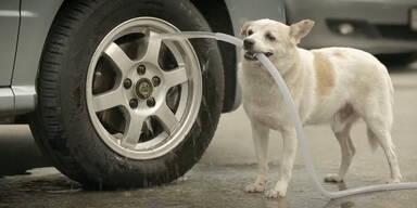 Hund revanchiert sich für Fressen