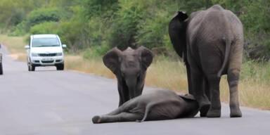 Elefanten-Mutter hilft Elefanten-Baby