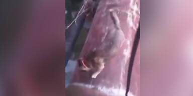 Rutschgefahr für den Hund
