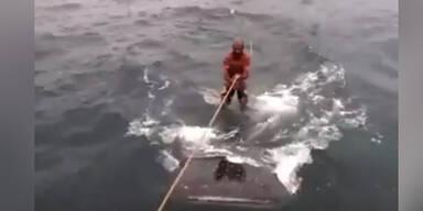 Irrer surft auf einem Mega-Hai