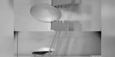 Kakerlaken-Roboter lernt krabbeln