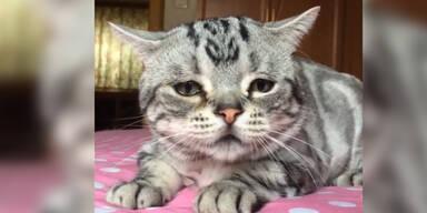 Luhu ist die traurigste Katze der Welt