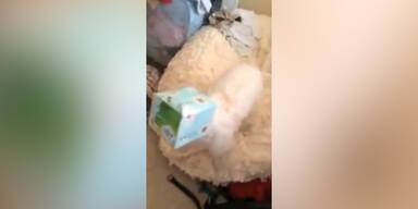 Hund verpackt sich als Geschenk