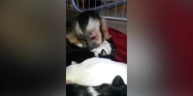 """Affe ist """"auf den Hund gekommen"""""""