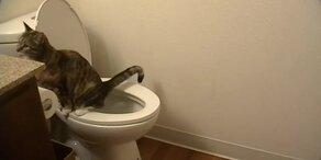Diese Katze geht aufs Töpfchen