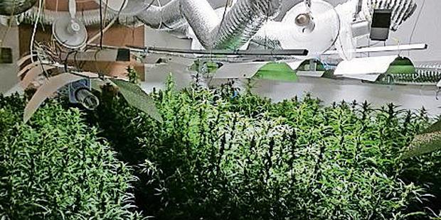 Cannabis Razzia Wien Niederösterreich