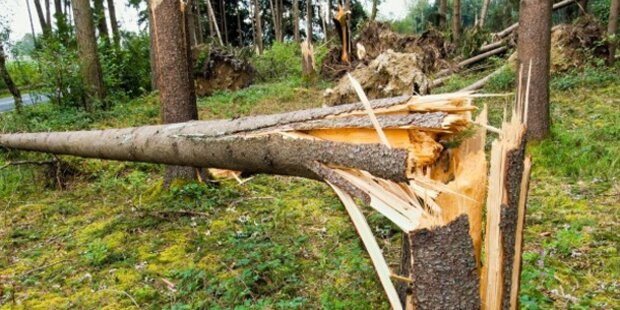 Mann von Baum getroffen und getötet