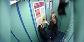 Hund beinahe von Aufzug erdrosselt