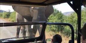 Schwarzenegger-Jeep von Elefant gerammt
