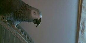 Darf ein Papagei vor Gericht aussagen?
