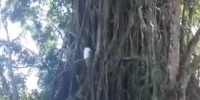 ER klettert wie Tarzan