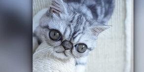 Das ist der Nachfolger von Grumpy Cat