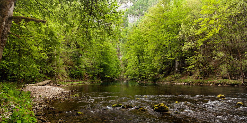 Kvarner - ADV - Bild 18 - Wald, Wasser, Flüsschen - 960x480
