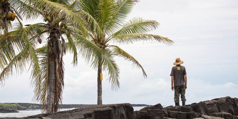 Hurrikan Lane peitscht Hawaii-Inseln