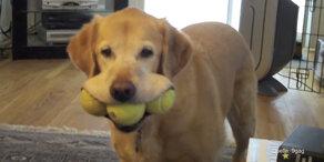 Hund nimmt den Mund zu voll