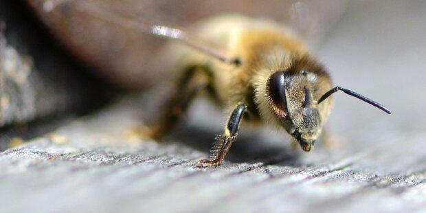 Biene an Bord legt Flugzeug lahm