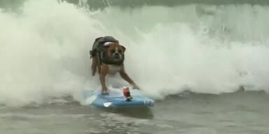 Surfbretter kommen auf den Hund