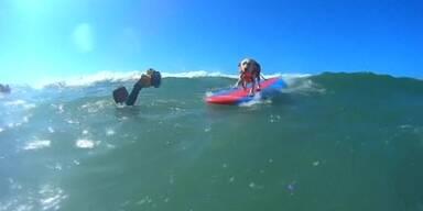 Hundewettsurfen in Kalifornien