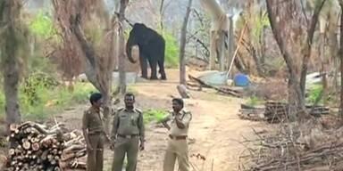 Nach Zyklon: Zoo verwüstet