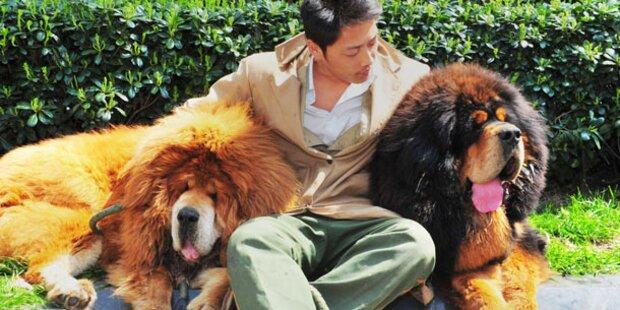 Chinese zahlte 1,4 Mio. für einen Hund