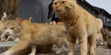 Insel: Mehr Katzen als Menschen