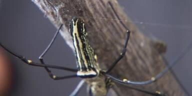 Das Geheimnis der Spinnenseide