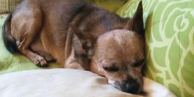 Hund nach 5 Jahren wieder daheim