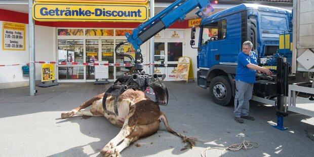 Fliehender Stier in Supermarkt erschossen