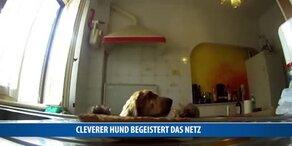 Cleverer Hund begeistert das Netz