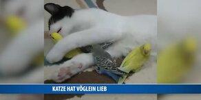 Katze schmust mit Vöglein